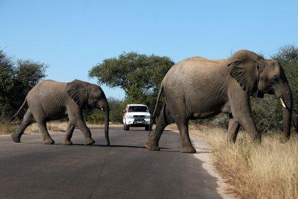 """""""Notre Jeep a dû s'arrêter devant des éléphants et ça nous amis en retard dans notre excursion. Pourquoi le gouvernement du Kenya ne leur interdit pas de traverser la route?"""", pourrait faire partie de la liste des plaintes farfelues reçues par l'agence Cook..."""